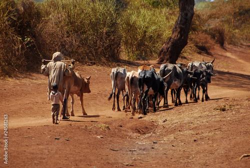Staande foto Afrika africa