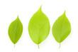 新緑の木の葉