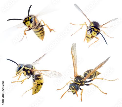 Fényképezés wasps