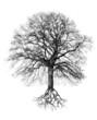 canvas print picture - Baum