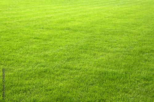 Obraz Englischer Rasen - fototapety do salonu