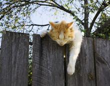 кот спящий на заборе