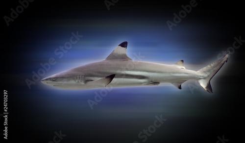 requin peur poisson machoire dent récif plongée aileron Canvas Print