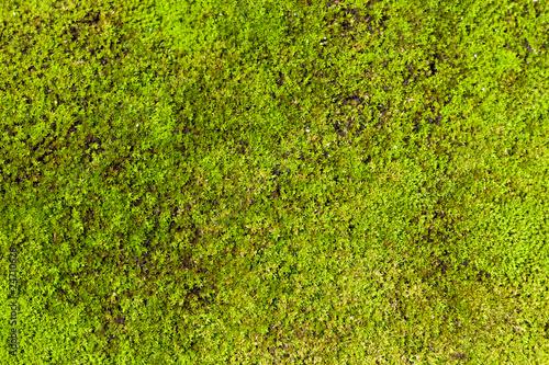 Foto op Plexiglas Groene moss background
