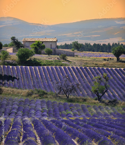 Photo Stands Lavender maison dans son champs de lavande