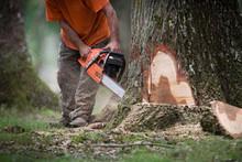 Coupe Forêt Arbre Tronc Abattage Gestion Tronconneuse Bucheron