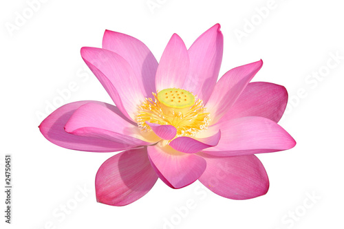 Foto op Canvas Lotusbloem lotus flower