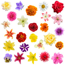 Big Collage From  Flowers