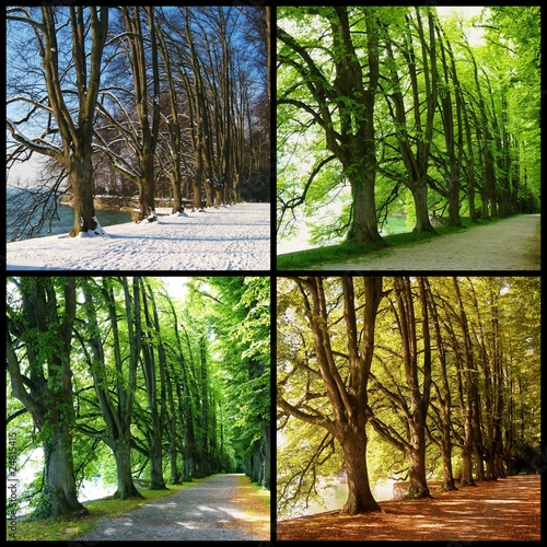 Láminas  Four Seasons