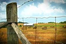 Field Of Freshly Cut Bales Of Hay