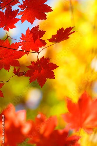 Plakaty rośliny   jesienna-pora-roku