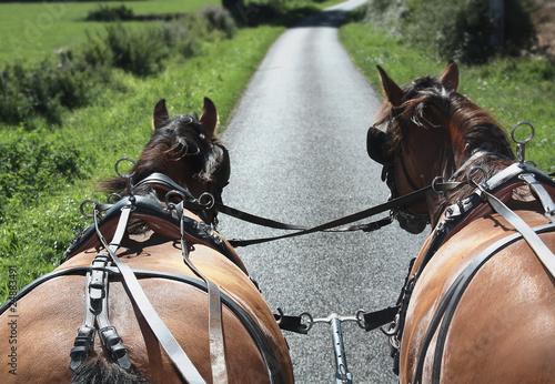 Fotografie, Obraz  Attelage de calèche sur la route
