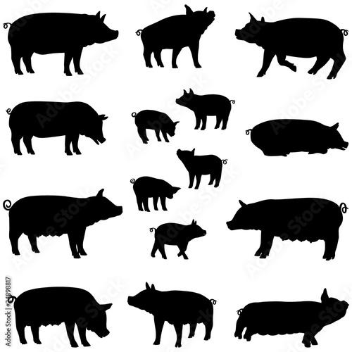 Fotografie, Obraz  porc truie et porcelet silhouette pack
