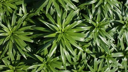 green bckgrnd