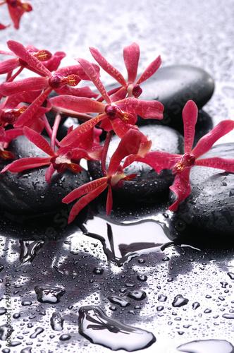 zdroju-wciaz-zycie-i-czerwony-storczykowy-kwiat