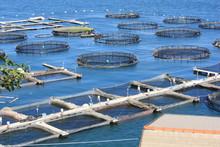 Fish Farm In La Spezia Italy