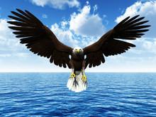 Eagle Landing On Ocean