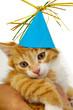 Leinwandbild Motiv Kitten with hat
