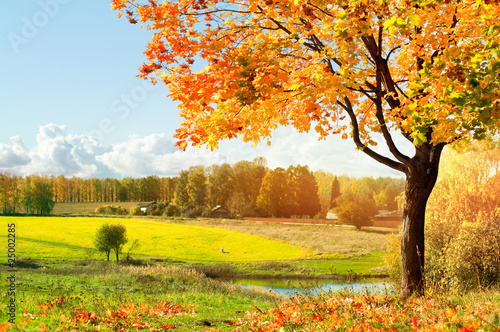 Poster de jardin Jaune Autumn at the morning park