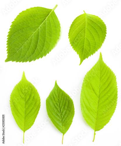 Fotografía  木の葉