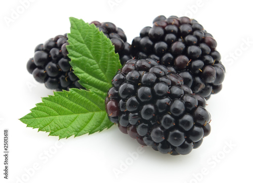 Fotografija  Blackberry with leaves