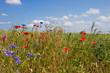 canvas print picture - feldblumen - field flowers