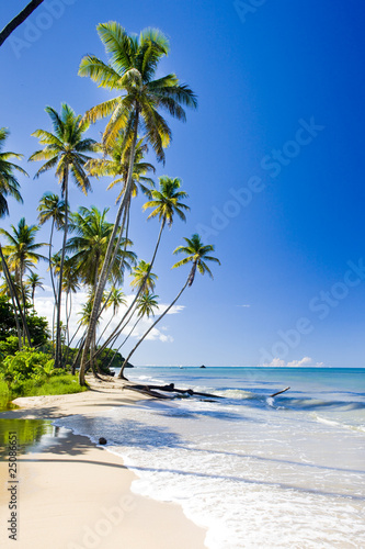 Northern coast of Trinidad, Caribbean