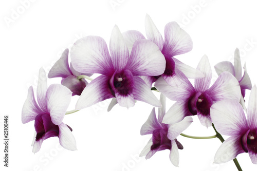 Photo Stands Orchid 00027STN