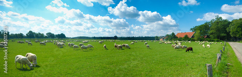 Papiers peints Sheep sheep