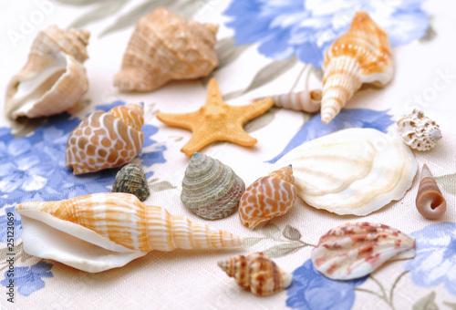 Fotografie, Obraz  Shells - Conchiglie
