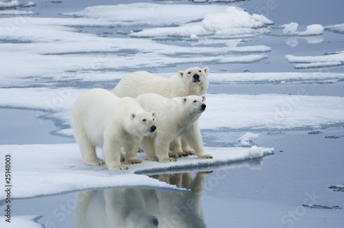 Deurstickers Ijsbeer Polar Bear & Yearling Cubs