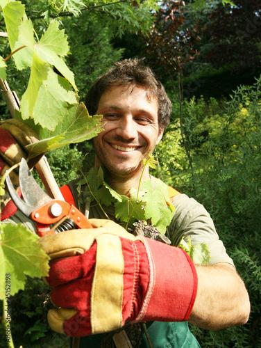 Fotografía  vigne taillée par un jardinier vigneron