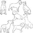psy dogs