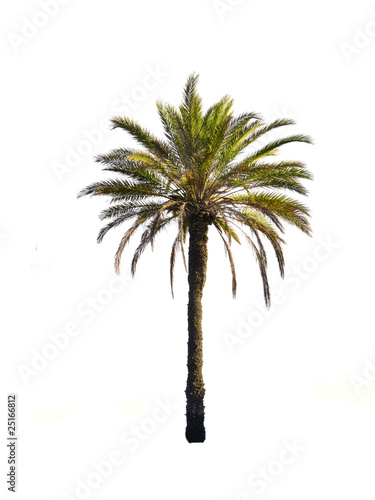 Photo sur Aluminium Palmier le palmier