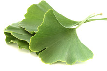 Several Green Fresh Ginkgo Biloba Leaves On White Background