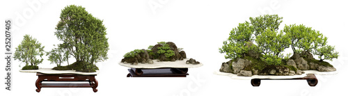 Recess Fitting Bonsai collection of the best china bonsai with white isolated backgrou