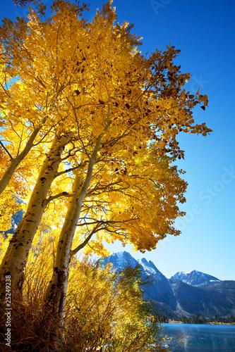 Poster Parc Naturel Autumn