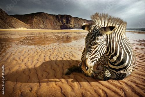 Foto op Canvas Zebra Beach Zebra