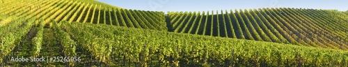 Fotografía Panorama viticole