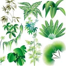 Piante E Vegetazione Tropicale...