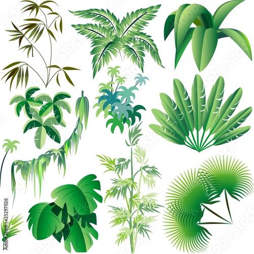 Photo Stands Draw Piante e Vegetazione Tropicale-Exotic Plants and Trees-Vector