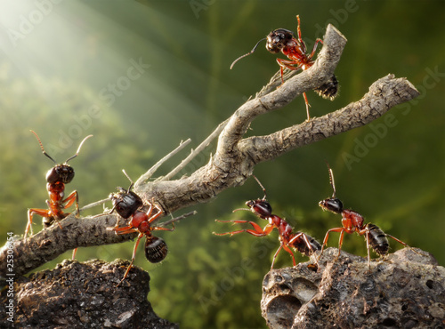 Photo team of ants breaking down rusty tree