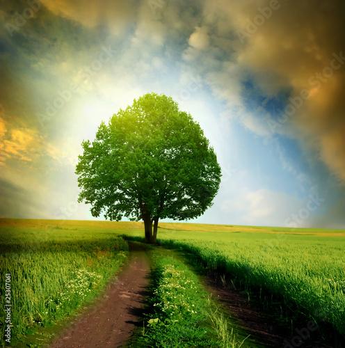 Doppelrollo mit Motiv - solitary tree in the sunset