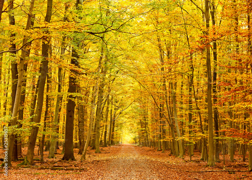 Canvas Prints Honey Pathway in the autumn park