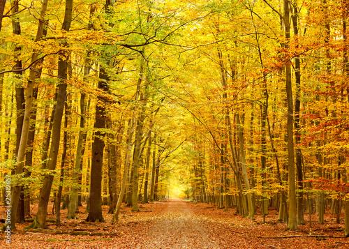 Fototapeta las droga-w-parku-jesienia