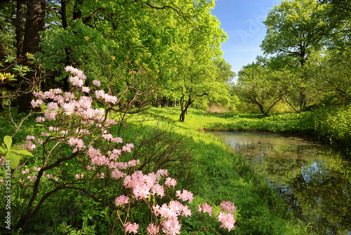 Spring landscape with pond