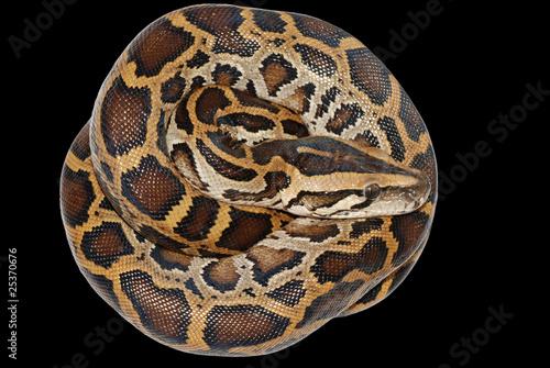 Foto op Plexiglas Krokodil boa snake isolated