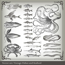 Vector Set: Fish And Sea Food