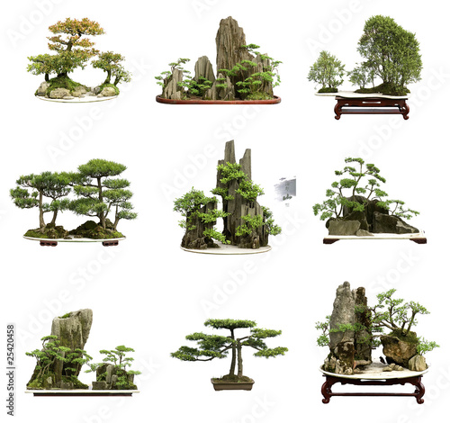 Poster Bonsai collection of the best china bonsai with white isolated backgrou
