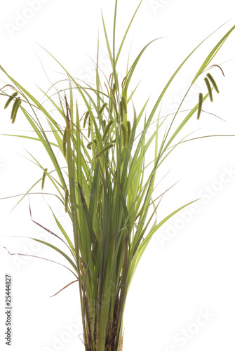 Fotografie, Obraz  grass